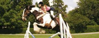 English and Horse riding courses for a junior